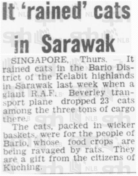 Chiến dịch thả mèo, những người lính dù đáng yêu nhất trong lịch sử được Không quân Hoàng gia Anh đích thân vận chuyển để đối phó với bệnh dịch - Ảnh 8.