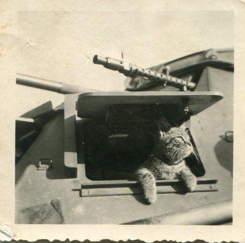 Chiến dịch thả mèo, những người lính dù đáng yêu nhất trong lịch sử được Không quân Hoàng gia Anh đích thân vận chuyển để đối phó với bệnh dịch - Ảnh 2.