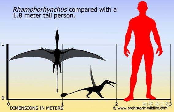 Rhamphorhynchus: Loài thằn lằn bay tí hon sở hữu hàm răng của tử thần - Ảnh 3.