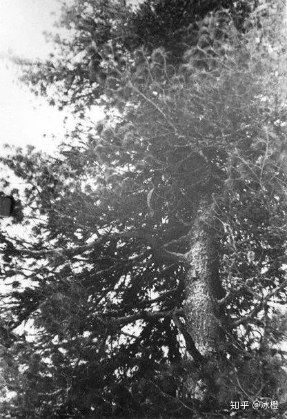 Sự kiện đèo Dyatlov: Tai nạn leo núi kỳ lạ nhất trong lịch sử nhân loại (Phần 2) - Ảnh 2.