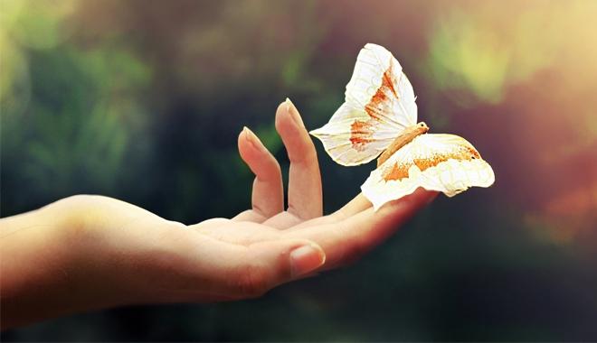 Hiệu ứng cánh bướm là sai, các nhà khoa học đã chứng minh được điều này ở cấp độ lượng tử - Ảnh 1.