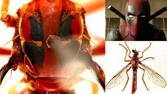 Phát hiện 5 loài ruồi sát thủ mới, đặt tên theo các siêu anh hùng trong vũ trụ điện ảnh Marvel - Ảnh 1.