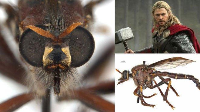 Phát hiện 5 loài ruồi sát thủ mới, đặt tên theo các siêu anh hùng trong vũ trụ điện ảnh Marvel - Ảnh 2.
