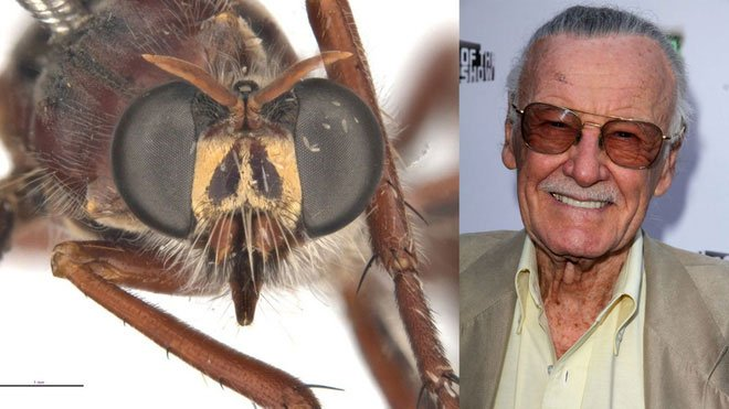 Phát hiện 5 loài ruồi sát thủ mới, đặt tên theo các siêu anh hùng trong vũ trụ điện ảnh Marvel - Ảnh 4.