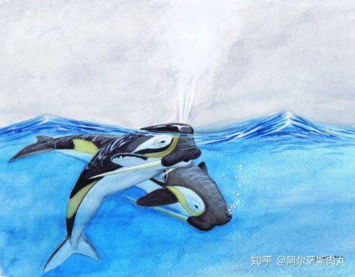 Odobenocetops: Loài cá voi kỳ lạ có cặp ngà bên dài bên ngắn - Ảnh 5.