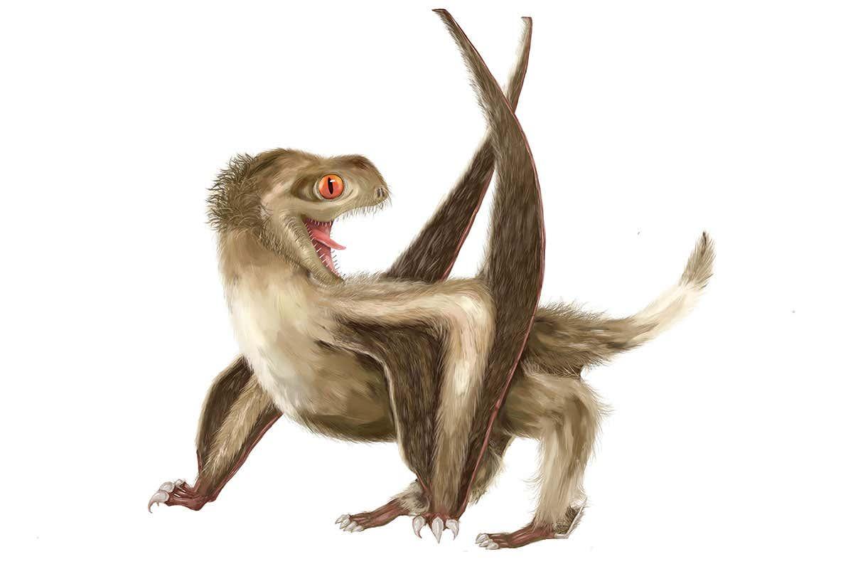 Nguồn gốc của lông vũ có thể sớm hơn nhưng gì chúng ta vẫn biết và cũng không liên quan gì đến việc bay - Ảnh 5.
