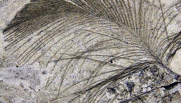 Nguồn gốc của lông vũ có thể sớm hơn nhưng gì chúng ta vẫn biết và cũng không liên quan gì đến việc bay - Ảnh 7.