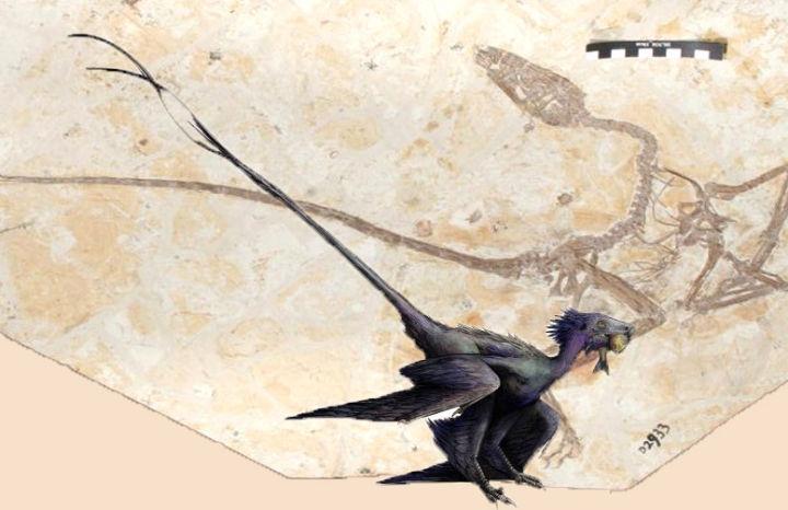 Nguồn gốc của lông vũ có thể sớm hơn nhưng gì chúng ta vẫn biết và cũng không liên quan gì đến việc bay - Ảnh 3.