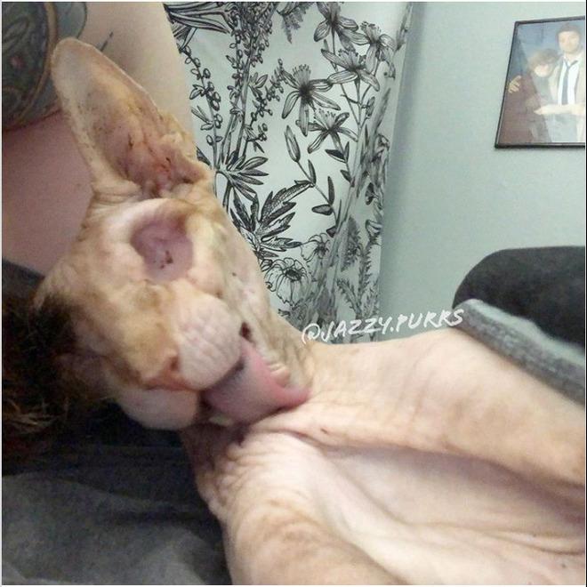 Gặp gỡ Jasper, chú mèo không lông đã bị cắt bỏ cả hai nhãn cầu với hàng chục nghìn người hâm mộ - Ảnh 12.