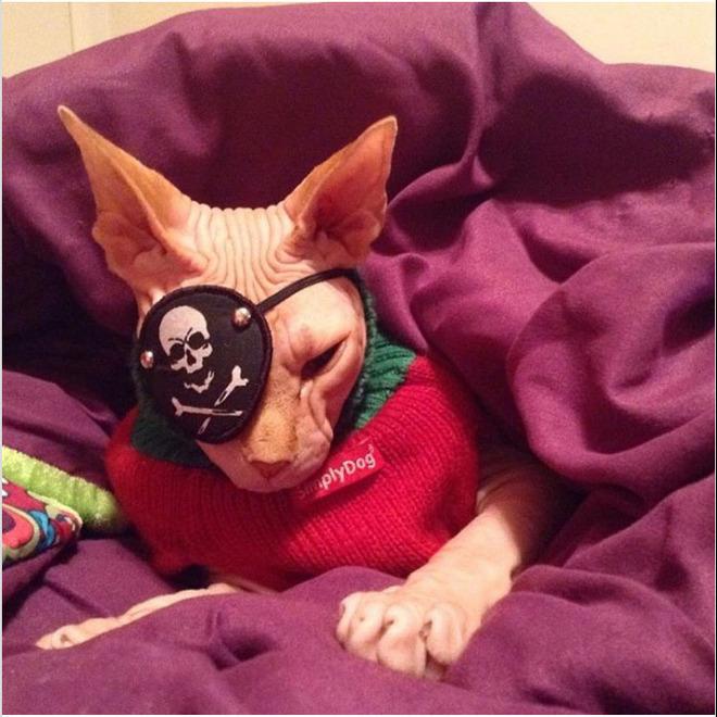 Gặp gỡ Jasper, chú mèo không lông đã bị cắt bỏ cả hai nhãn cầu với hàng chục nghìn người hâm mộ - Ảnh 14.