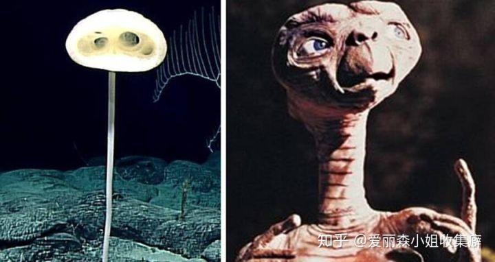 Phát hiện loài bọt biển ET trong Khu rừng kỳ dị ở Thái Bình Dương trông giống như một sinh vật ngoài hành tinh - Ảnh 1.