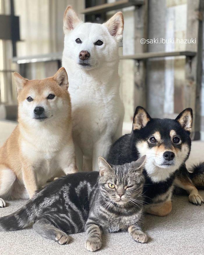 Chú mèo này là sự thay thế hoàn hảo cho chú chó Shiba inu chuyên phá hỏng các bức ảnh chụp nhóm - Ảnh 9.