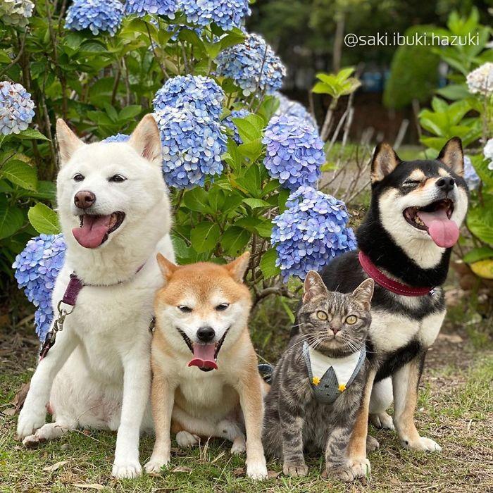Chú mèo này là sự thay thế hoàn hảo cho chú chó Shiba inu chuyên phá hỏng các bức ảnh chụp nhóm - Ảnh 8.