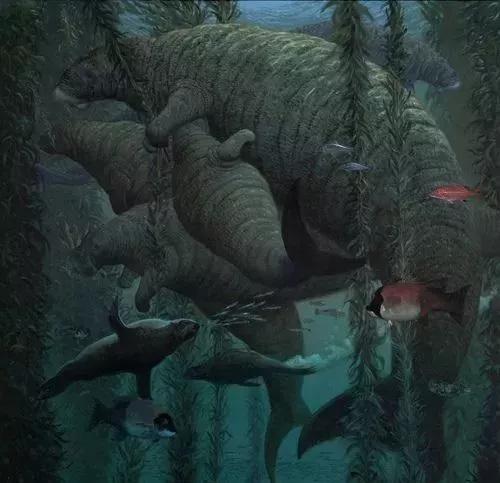 Chỉ mất 27 năm từ khi phát hiện ra đến khi tuyệt chủng, chuyện gì đã xảy ra với con vật khổng lồ dưới biển này? - Ảnh 15.