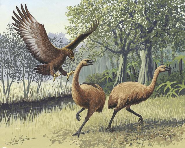 Những loài động vật tuyệt chủng vì sự thiếu hiểu biết của loài người - Ảnh 1.