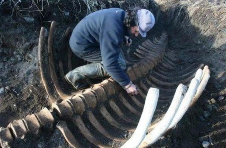 Chỉ mất 27 năm từ khi phát hiện ra đến khi tuyệt chủng, chuyện gì đã xảy ra với con vật khổng lồ dưới biển này? - Ảnh 18.