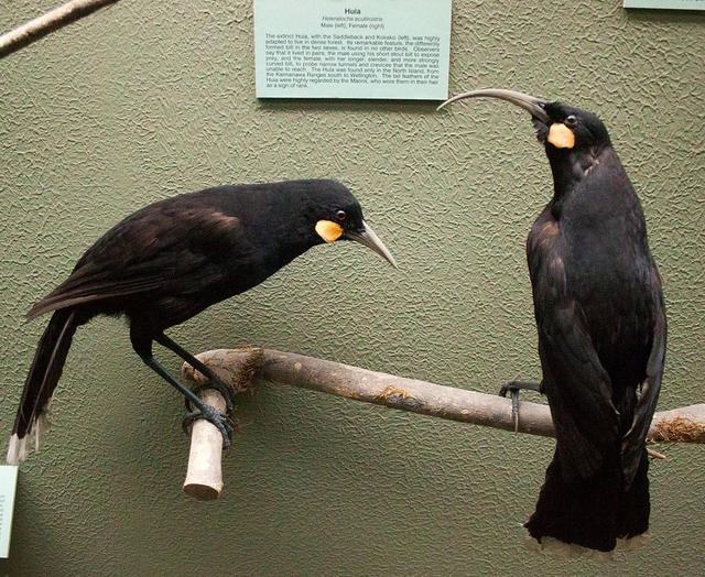 Những loài động vật tuyệt chủng vì sự thiếu hiểu biết của loài người - Ảnh 7.