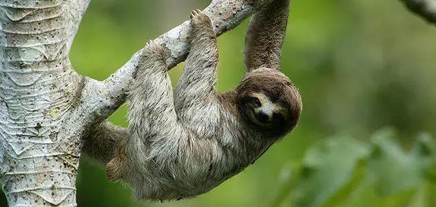 Những điều bạn chưa biết về việc xì hơi ở động vật: những cú xì hơi mùi sinh tử - Ảnh 2.