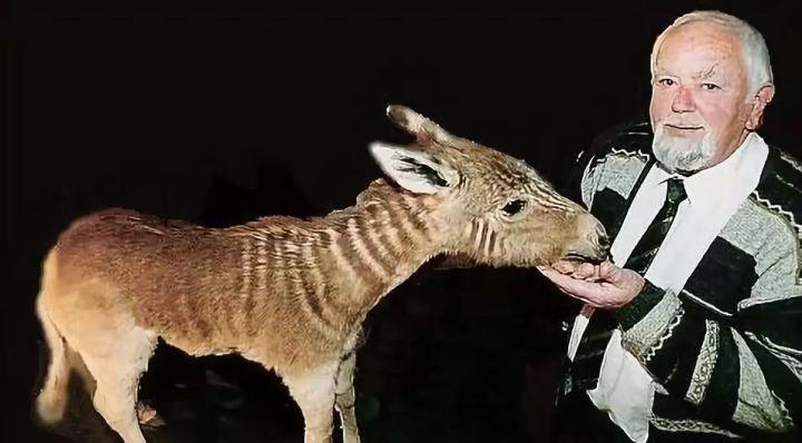 Đã tuyệt chủng một thế kỷ, liệu loài ngựa vằn tàn lụi này có thể thực sự sống lại? - Ảnh 10.