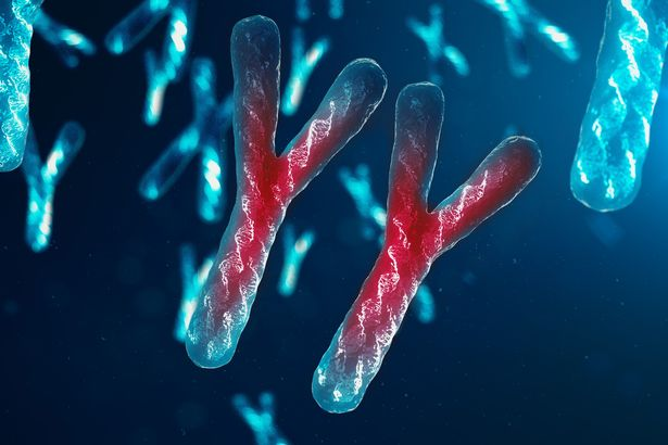 Nam giới có thể sẽ tuyệt chủng vì nhiễm sắc thể Y đang dần biến mất? - Ảnh 1.