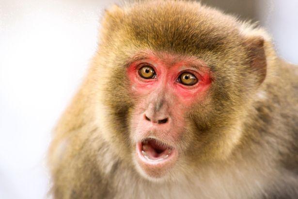 Nam giới có thể sẽ tuyệt chủng vì nhiễm sắc thể Y đang dần biến mất? - Ảnh 2.