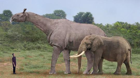 Tại sao những động vật như kỳ lân và Gryphon không tồn tại, nhưng những động vật như hươu cao cổ thì có? - Ảnh 2.