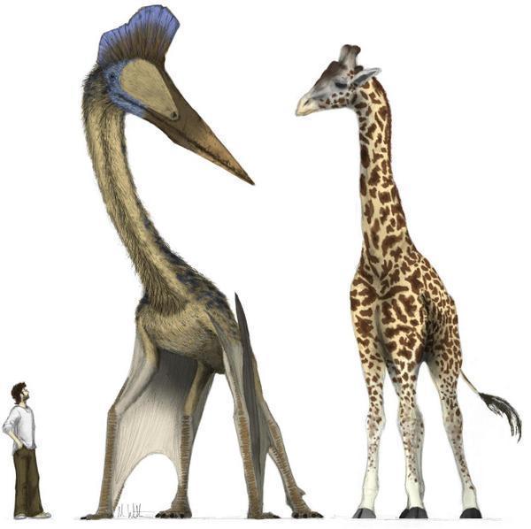 Tại sao những động vật như kỳ lân và Gryphon không tồn tại, nhưng những động vật như hươu cao cổ thì có? - Ảnh 8.