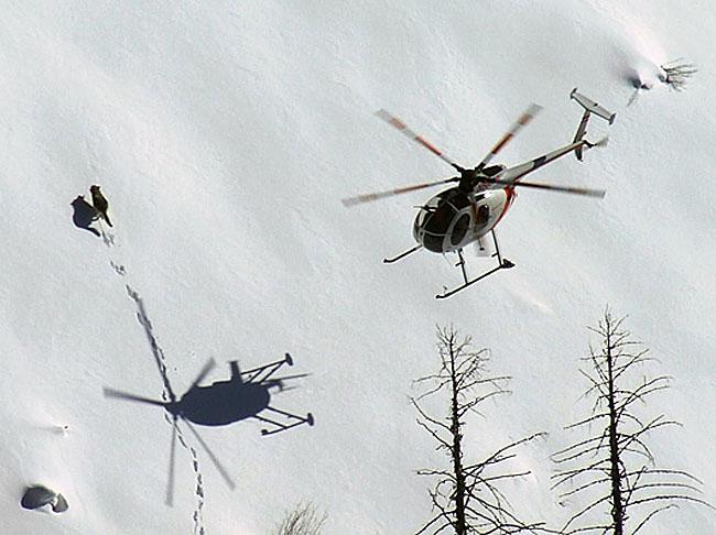 Những con sói Canada được cưỡi máy bay đột nhập vào Michigan để thực hiện một nhiệm vụ vô cùng đặc biệt - Ảnh 1.