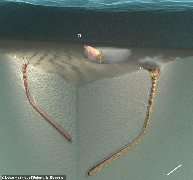 Hàng chục triệu năm về trước, một loài sâu ăn thịt dài 2m từng lang thang dưới đáy biển - Ảnh 2.