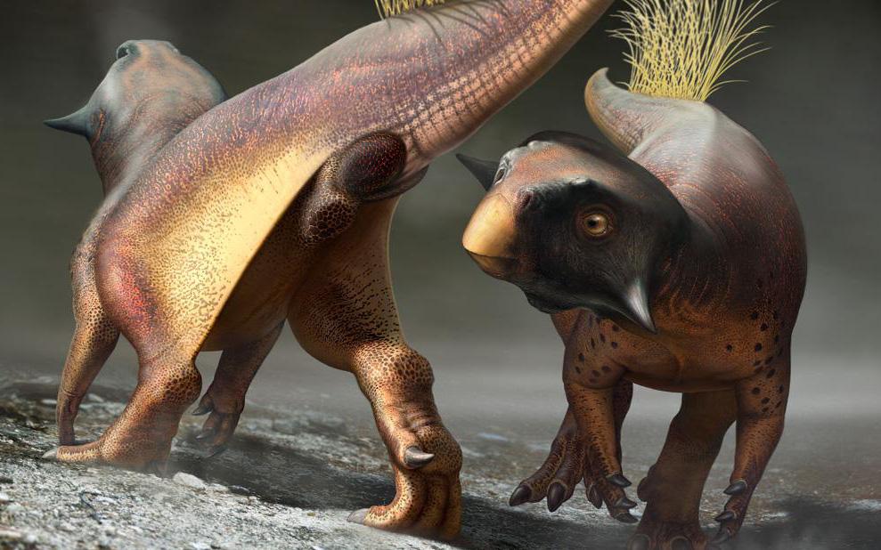 """Cuối cùng thì giới cổ sinh vật học cũng đã tìm ra được """"cần tăng dân số"""" của khủng long"""