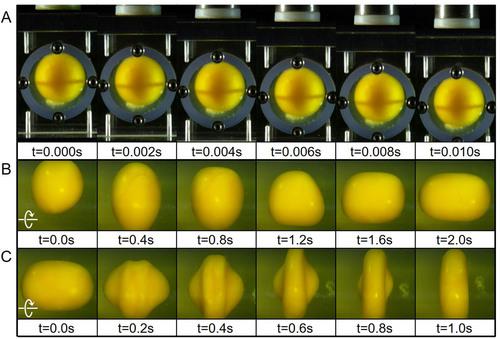 Khối lòng đỏ trứng ma thuật này đang giúp các nhà khoa học hiểu về chấn thương sọ não - Ảnh 6.