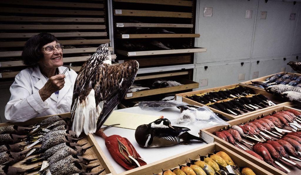 Quá khứ huy hoàng của thám tử lông vũ - người đã thay đổi ngành hàng không bằng nghiệp vụ pháp y - Ảnh 3.