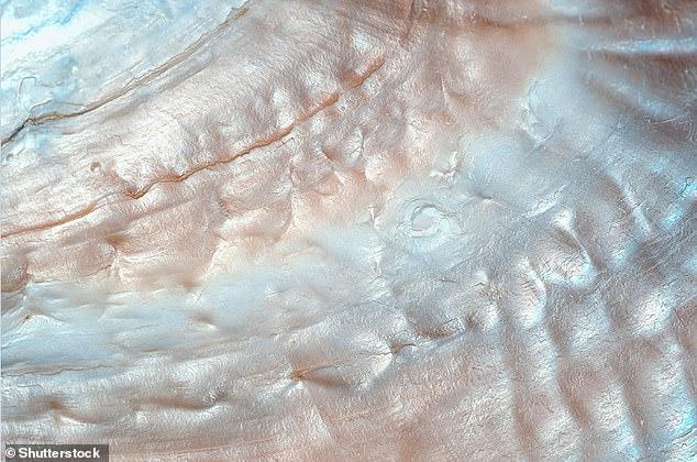 Chế tạo thành công loại kính không thể vỡ lấy cảm hứng từ vỏ sò - Ảnh 2.