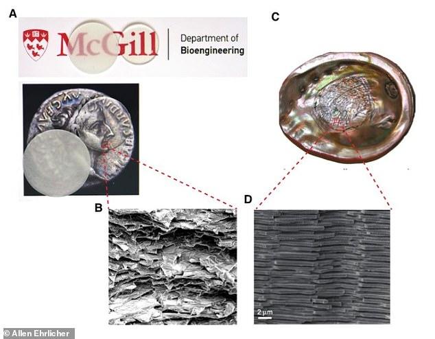 Chế tạo thành công loại kính không thể vỡ lấy cảm hứng từ vỏ sò - Ảnh 3.