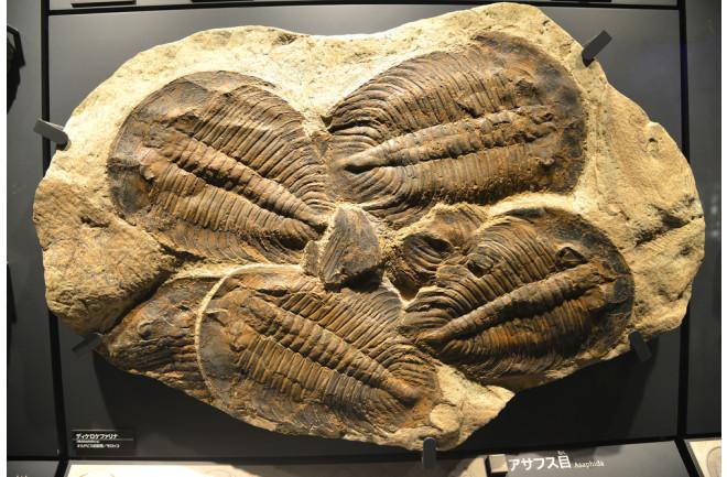 Sự kiện tuyệt chủng kỷ Ordovic: lần đầu tiên sự sống Trái Đất biết tới mùi cay đắng - Ảnh 5.
