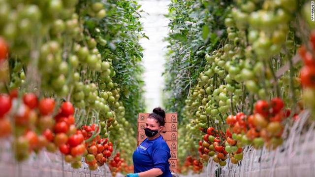 Tương lai của nông nghiệp bên trong nhà kính lớn nhất nước Mỹ: Sử dụng robot, AI và dữ liệu để trồng 22.500 tấn cà chua mỗi năm - Ảnh 2.