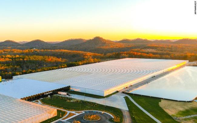 Tương lai của nông nghiệp bên trong nhà kính lớn nhất nước Mỹ: Sử dụng robot, AI và dữ liệu để trồng 22.500 tấn cà chua mỗi năm - Ảnh 1.