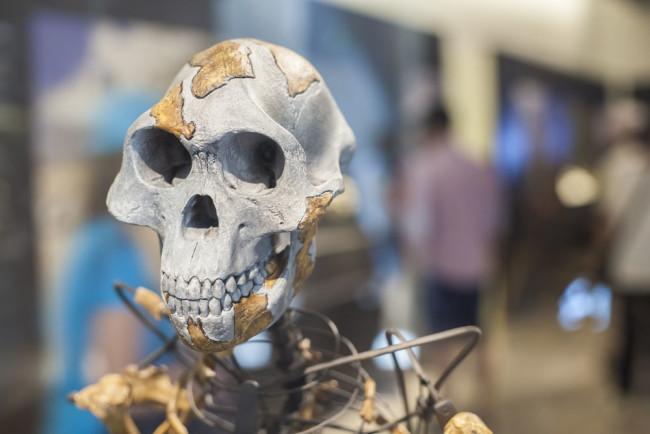 Dữ liệu cho thấy từ Thời Đồ đá tới nay, não con người đang teo nhỏ lại - Ảnh 2.