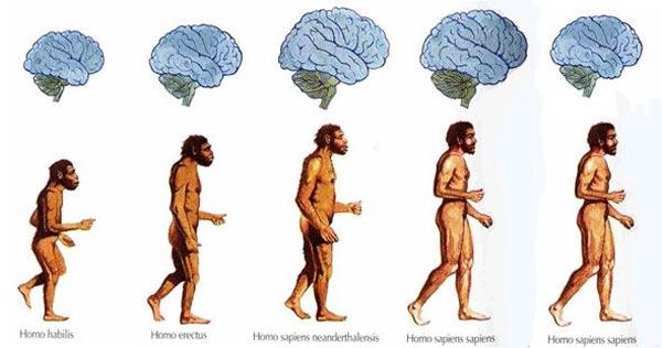 Dữ liệu cho thấy từ Thời Đồ đá tới nay, não con người đang teo nhỏ lại - Ảnh 1.