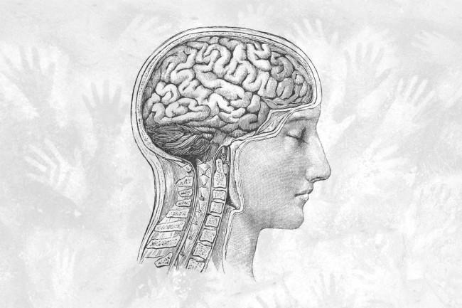 Dữ liệu cho thấy từ Thời Đồ đá tới nay, não con người đang teo nhỏ lại - Ảnh 3.