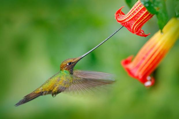 Những sự thật khó tin về các loài động vật cho chúng ta thấy mẹ thiên nhiên quả thực đã sáng tạo đến mức nào - Ảnh 2.