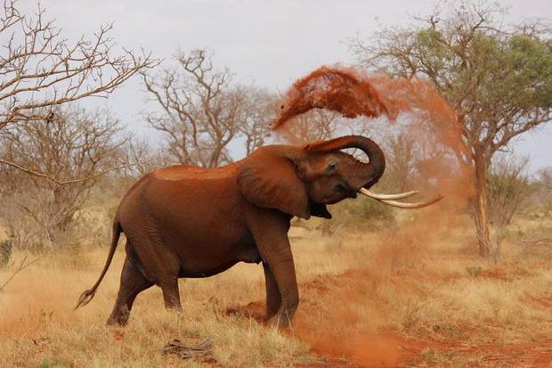 Những sự thật khó tin về các loài động vật cho chúng ta thấy mẹ thiên nhiên quả thực đã sáng tạo đến mức nào - Ảnh 3.