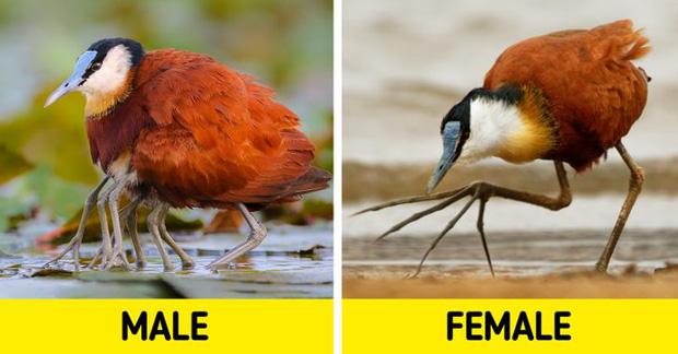 Những sự thật khó tin về các loài động vật cho chúng ta thấy mẹ thiên nhiên quả thực đã sáng tạo đến mức nào - Ảnh 7.