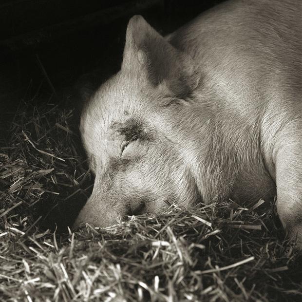 Chùm ảnh những con vật được cho phép sống đến già gây ám ảnh lạ kỳ: Khi các mảnh đời ngắn ngủi được ban tặng sự sống buồn tủi - Ảnh 13.