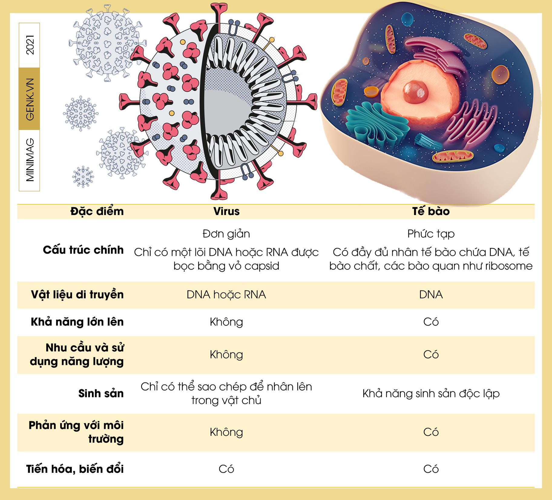 Một biên niên sử về virus: Từ những thiên thần của tiến hóa tới cơn ác mộng COVID-19 - Ảnh 3.