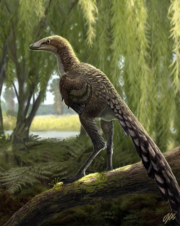 Một loài khủng long mới được phát hiện tại Tây Ban Nha có vẻ ngoài gần giống như loài chim hiện đại - Ảnh 2.