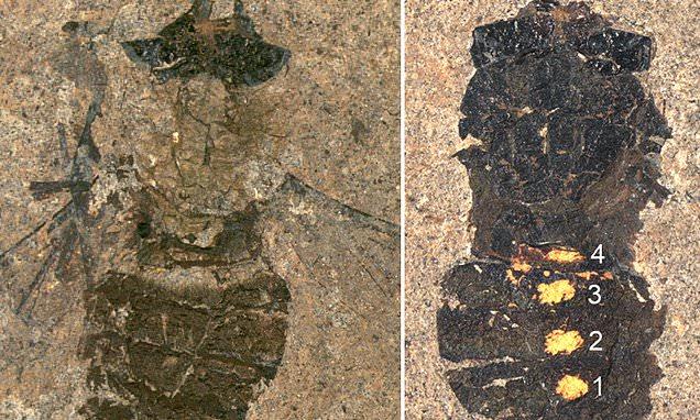 47 triệu năm triệu năm về trước, bữa ăn của con ruồi có những gì? - Ảnh 2.