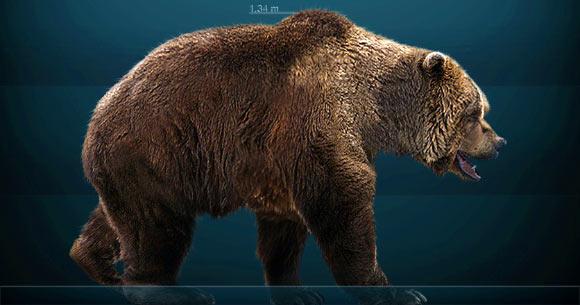 DNA 360.000 năm tuổi đã hé mở ánh sáng mới về lịch sử tiến hóa của gấu hang động - Ảnh 1.