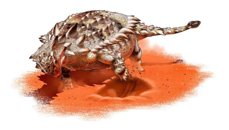Giáp long đuôi chùy - Ankylosaurid có thể là một loài ưa thích đào bới - Ảnh 1.