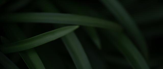 """Bộ ảnh nền """"không gian xanh"""" dành cho màn hình Ultrawide - Ảnh 4."""